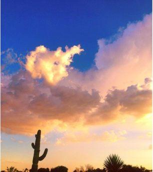cactus-clouds-at-sunset-park