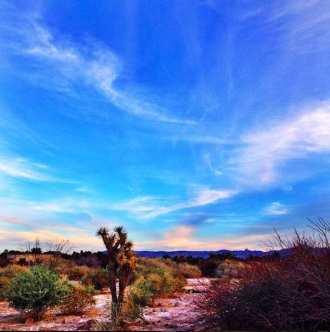 Sky and Shrubs at Sunset Park.jpg