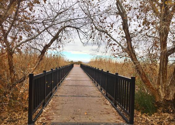 bridge view.jpeg