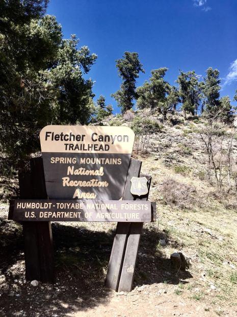 trail head.jpeg